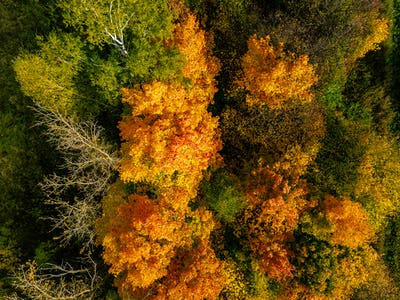 Aerial view of autumn forest. Beautiful landscape with  trees, green, red and orange leaves.
