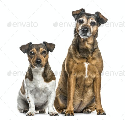 Two dogs sitting side by side, isolated on white
