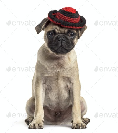 pug sitting and wearing a hat, dog, isolated on white