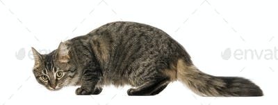 Side view of a worried cat, isolated on white