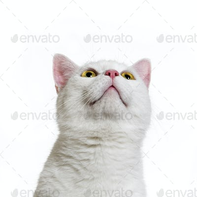 White mixed-breed cat (2 years old), isolated on white