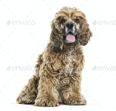 Brown Mixed-breed dog sitting and panting against white background