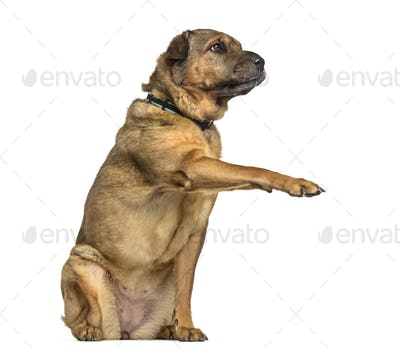 Mixed-breed dog , 7 years old, standing against white background