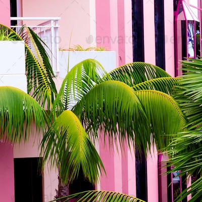 Palm on pink location. Plants on pink concept. Fashion beach vib