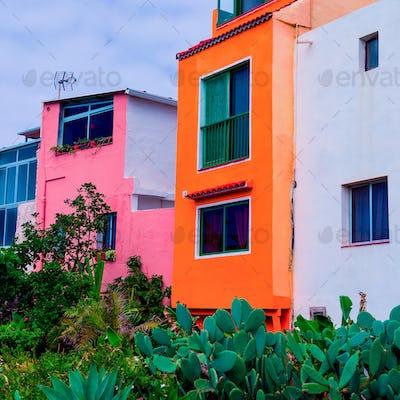 Canary island. Cactus garden.  Minimal tropical mood