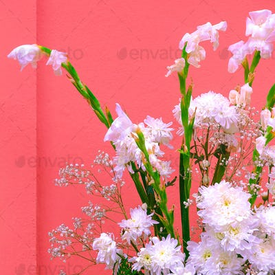 Plants on pink concept art. White flowers on pink wall backgroun