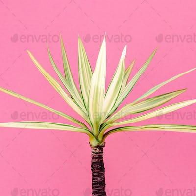 Tropical plant on pink. Mini palm.  Minimal fashion art