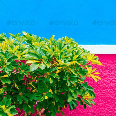Plant on the wall concept. Tropical green Minimal plant fashion