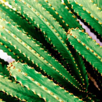 cactus background. Cacti lover. minimal