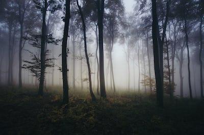 Dark mist in the haunted woods