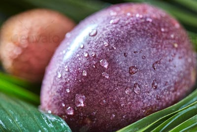 Close-up of Passion fruit in a drops of water - fresh juicy exotic fruit with tropical leaf