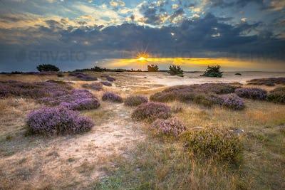 Veluwe Sunset over heathland with Heath