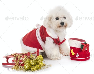 maltese dog and christmas