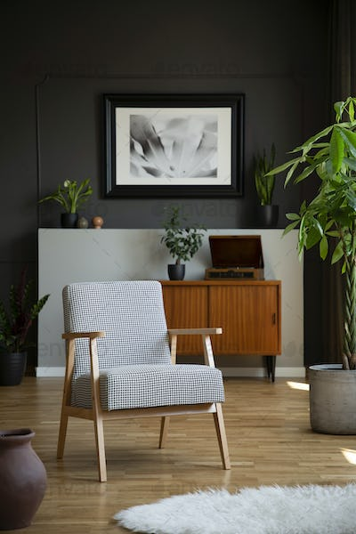 Retro armchair and tree in a living room interior with a cabinet