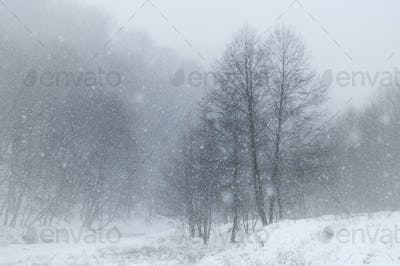 Snow falling over winter landscape
