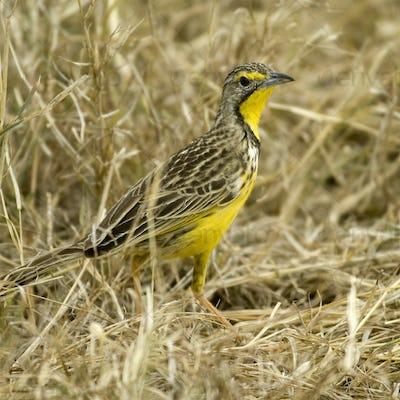 Bird Masai mara Kenya