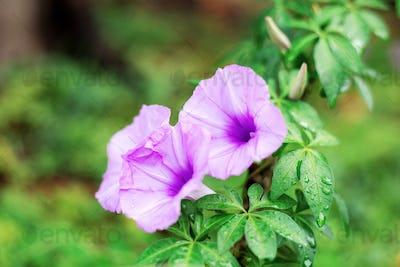 Purple flower in forest