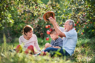 A senior couple with small grandson in apple orchard, having fun.