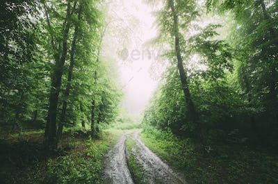 Road through green woods