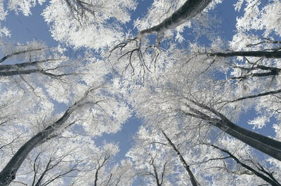 Enchanted winter wonderland forest with snow