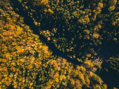 Road in the autumn forest aerial view from drone