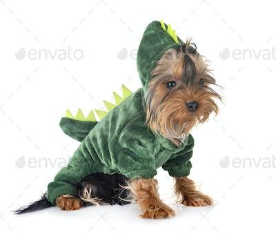 dinosaur yorkshire terrier