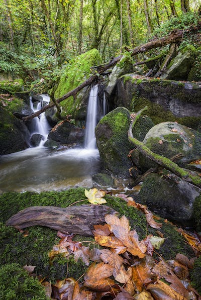 Autumnal mood in a Galician forest