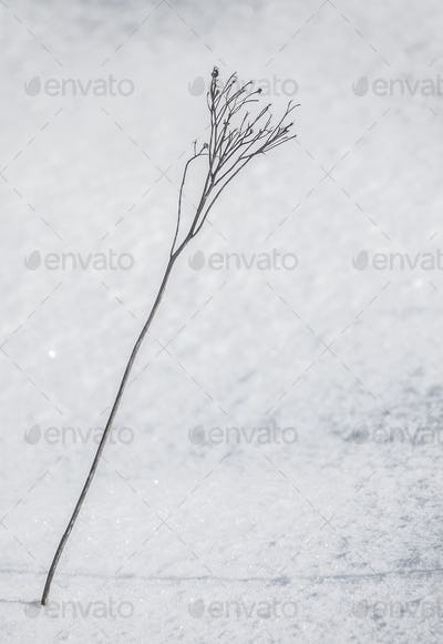 Plant In The Snow