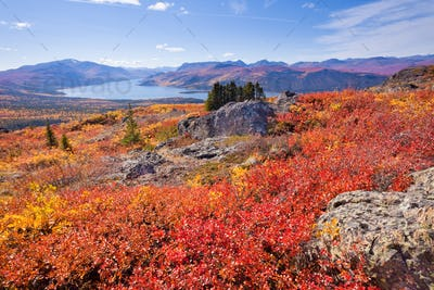 Fall colored tundra Fish Lake Yukon Territory Canada