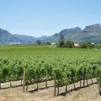 Vineyards landscape near Franschhoek