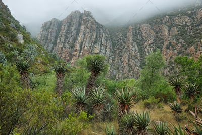 Redish mountains and cactus in Seweweekspoort pass