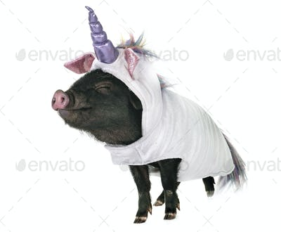 unicorn vietnamese pig in studio