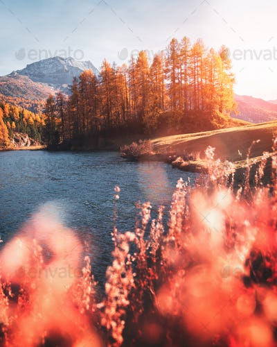 Picturesque view on autumn lake Silvaplana in Swiss Alps