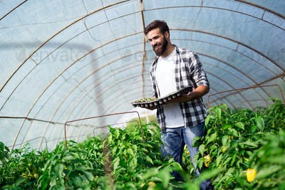 Young man doing plant work in hothouse