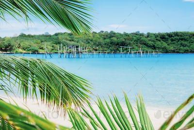 Coconut leaves on island