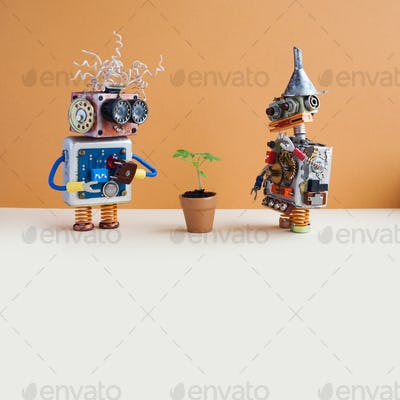 Two robots and flowerpot. Creative design robotic characters looks at the green plant housepot