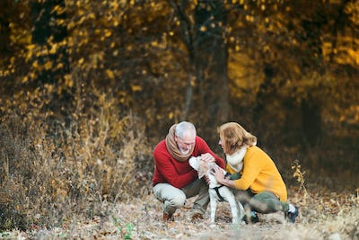 A senior couple with a dog in an autumn nature.