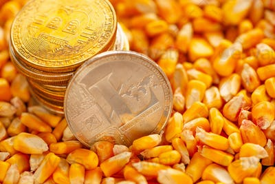 Litecoin and Bitcoin on top of corn kernels heap