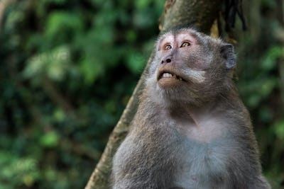 Cute Macaque in Ubud, Bali