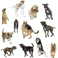Collection of 12 dogs in different positions