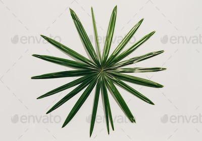 Circular tropical leaf on a light background.