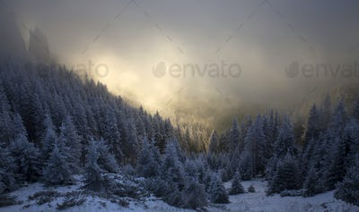 Trees covered with hoarfrost and snow in winter mountains - Holi