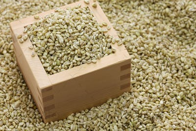 traditional barley koji for homemade mugi miso