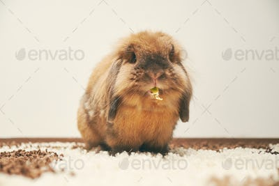 Bunny eating  white background