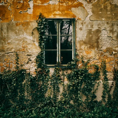 Old window ivy background