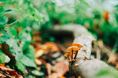 Mushrooms on tre trunk