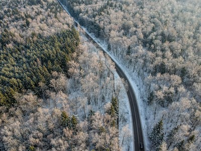 Winter forest with a road on a cold sunny morning