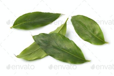 Green cardamom leaves