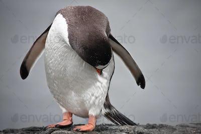 Penguin on a stone pillar
