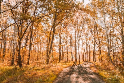 Path Road Way Pathway In Autumn Sunny Forest Trees